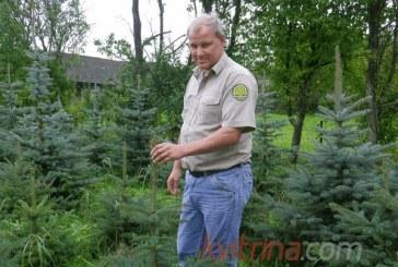Misija – užauginti miškus ateities kartoms
