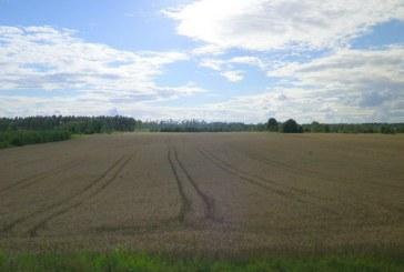 Ūkininkai skuba naudotis giedra