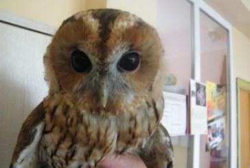 Išminties paukštis – mūsų vilties simbolis