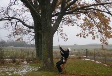 Medžių genėjimo menas pasiekė ir Prienų rajoną