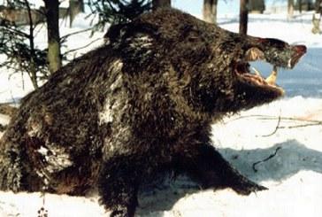 Informacija apie priemones, priimtas d?l afrikinio kiauli? maro