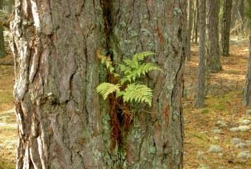 Nuodingi augalai, keliantys pavojų  žmogaus sveikatai