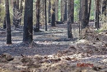 Siponių miške degė miško paklotė