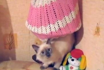 [tv] Katinas-šviestuvas