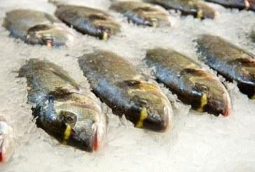 Kokią žuvį rinktis?