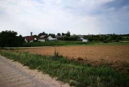 Prienų rajone, asmeniniame ūkyje, užfiksuotas kiaulių maro virusas