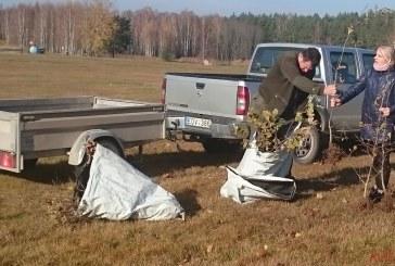 Birštone pasodinta 100 ąžuoliukų
