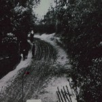 IMGP0290