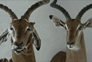 """Filmo """"Animus Animalis"""" režisierė Aistė Žegulytė kviečia pakalbėti apie žmones, žvėris ir daiktus"""