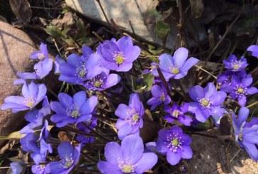 Už lango spalvingas pavasaris (nuotr.)