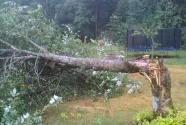 Stiprus vėjas vartė medžius