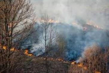 Šiais metais krašte sunaikinta apie 10 hektarų pavasarinės žolės
