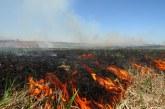 Ugniagesiai informuos gyventojus apie žolės deginimo pavojus