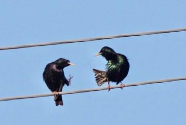 Menulis, paukščiai ir gamta (Fotoreportažas)