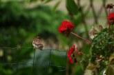 Žvilgsnis į gamtą. Sekmadienio rytas (Fotoakimirkos)