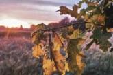 Tautiškos giesmės giedojimas ant Matiešionių piliakalnio (Fotoreportažas)
