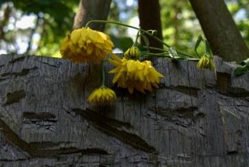 Arūno Aleknavičiaus žvilgsnis į Poezijos pavasarį Davatkyne (Fotoreportažas)