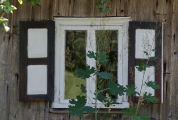 Poezijos pavasaris, kuomet kvepia obuoliais