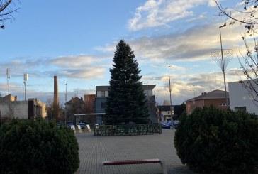 Kalėdinės eglės kelionė į Laisvės aikštę (Fotoreportažas)