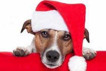 Kalėdiniai vyniotiniai