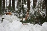 Birštono savivaldybėje kelius nuo sniego valo ūkininkai