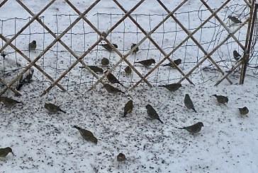 Sekmadienio žiemos mozaika (Fotoakimirkos). Papildyta