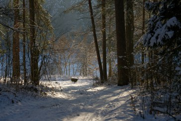 Žiemos mozaika (Fotoakimirkos)