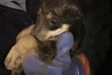 Miške paliktus šuniukus padėjo gelbėti ir Šilavoto ugniagesiai