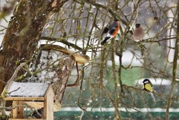 Snieguoto  ryto puota  (Fotoreportažas)