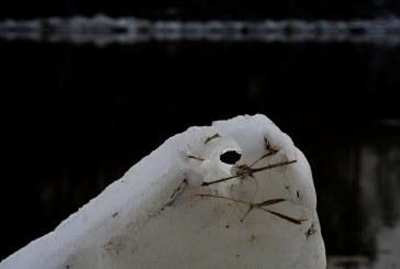 Paklydusios  žiemos pėdsakai (Fotoreportažas)