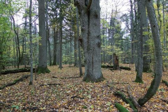 """Naujasis """"Sengirės fondo"""" įsigytas miško sklypas. Nuotraukos autorius Renatas Jakaitis"""