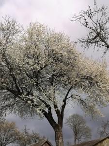 Pavasario haiku I- Eglė Janušaitienė