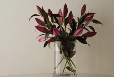 Gėlės interjere: 5 svarbiausi pasirinkimo elementai